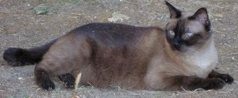Petmania storie di gatti for Allontanare i gatti