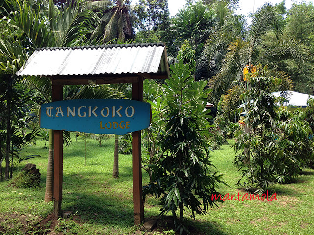 Tangkoko Lodge