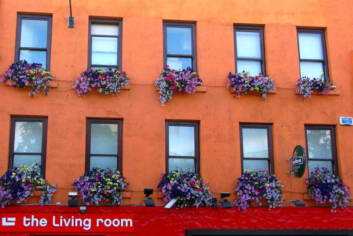 windows with flowers, Galway city