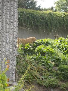Copenhagen Zoo.