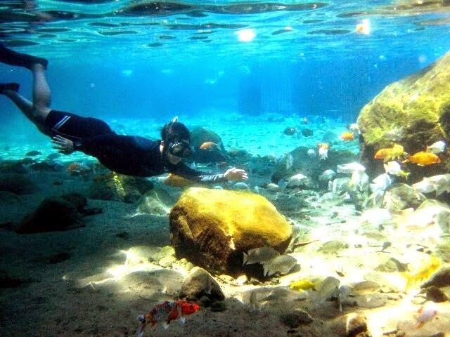 Umbul Ponggok, Snorkeling di Klaten Serasa di Bunaken