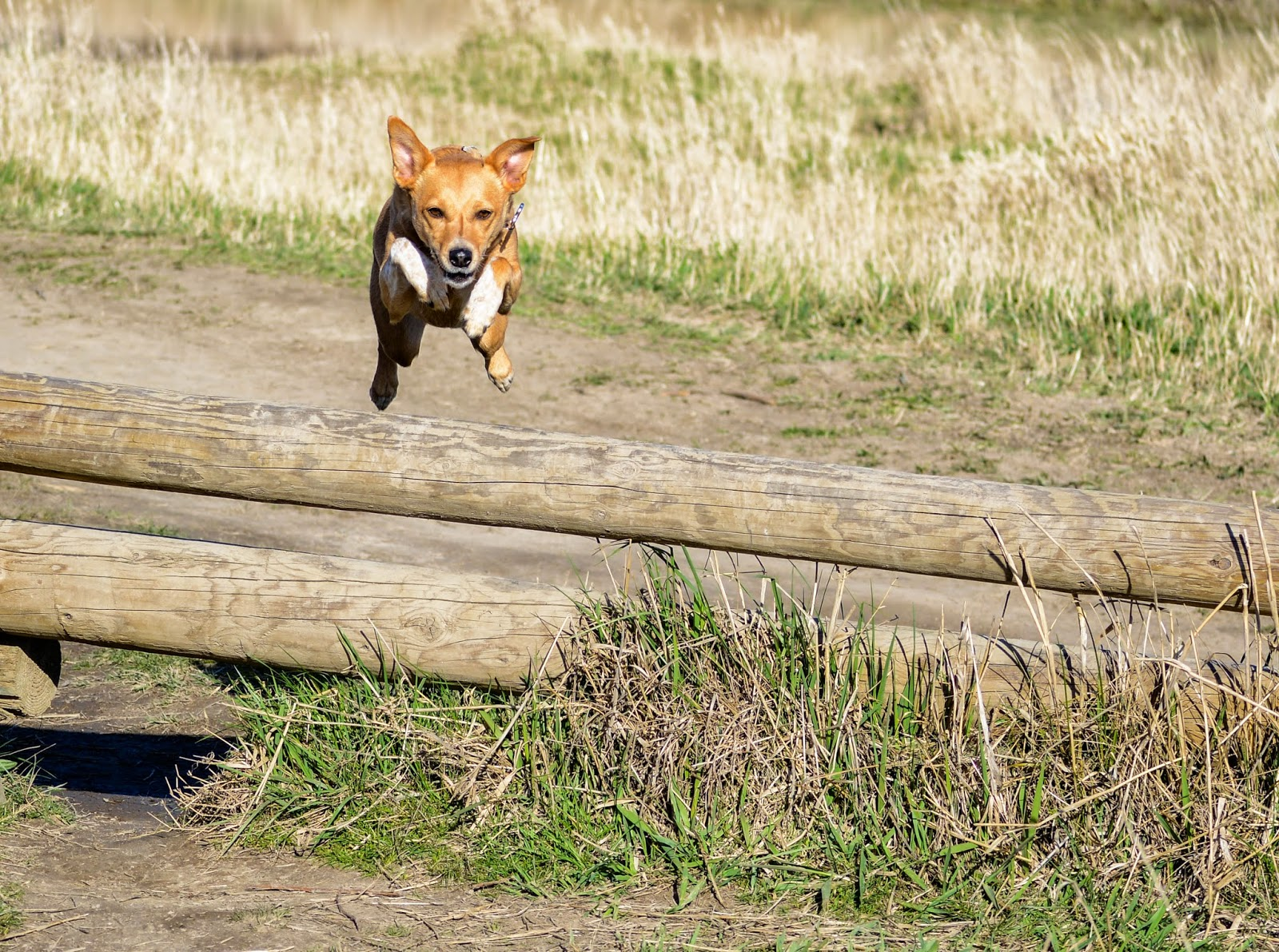 Oregon Thousand Acre Dog Park