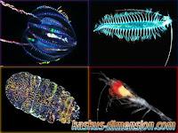 Organisme Unik Bioluminesensi
