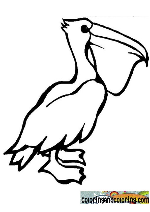 Free Coloring Pages Of Pelican