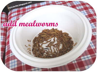 how to keep mealworms as pets
