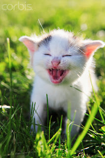 Foto foto kucing lucu dan imut