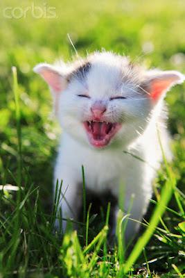 kucing terlucu, kucing lucu, kucing imut, kucing menggemaskan