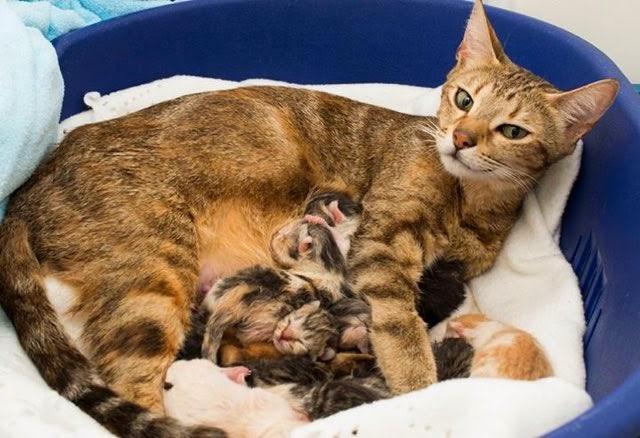 كيف تعرف أن قطتك حامل المزرعة