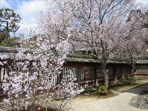 京都市山科区|毘沙門堂