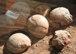 Fossil Dinosaur eggs