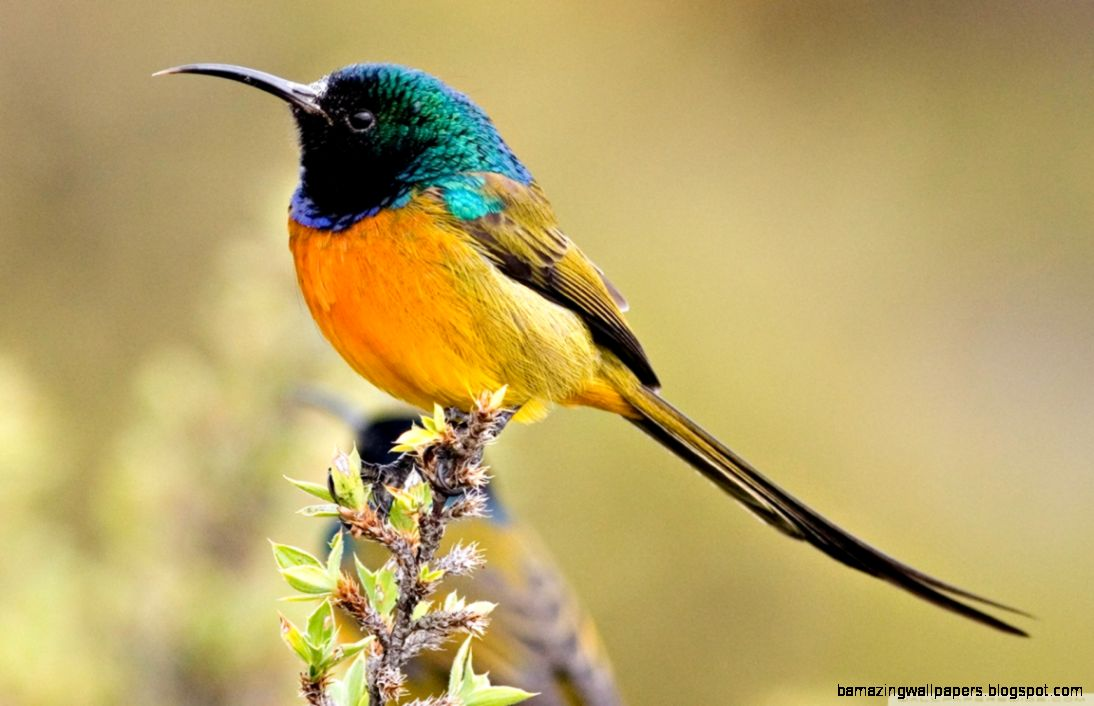 Colorful Bird HD desktop wallpaper  Widescreen  High Definition