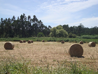 Beautiful Hay Bales Cilynder in a field photo - Monte Real - Leiria