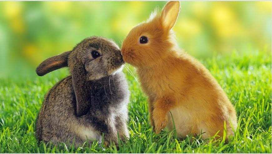 Tavşan Severlerin Buluşma Noktası...