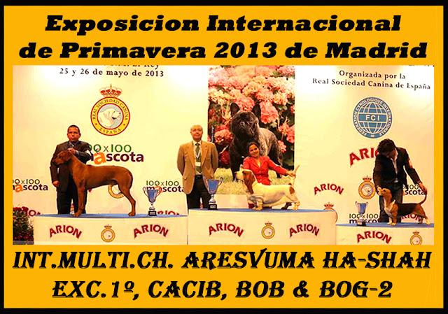 Aresvuma Ha-Shah Reserva de Grupo - Exposición Primavera 2013
