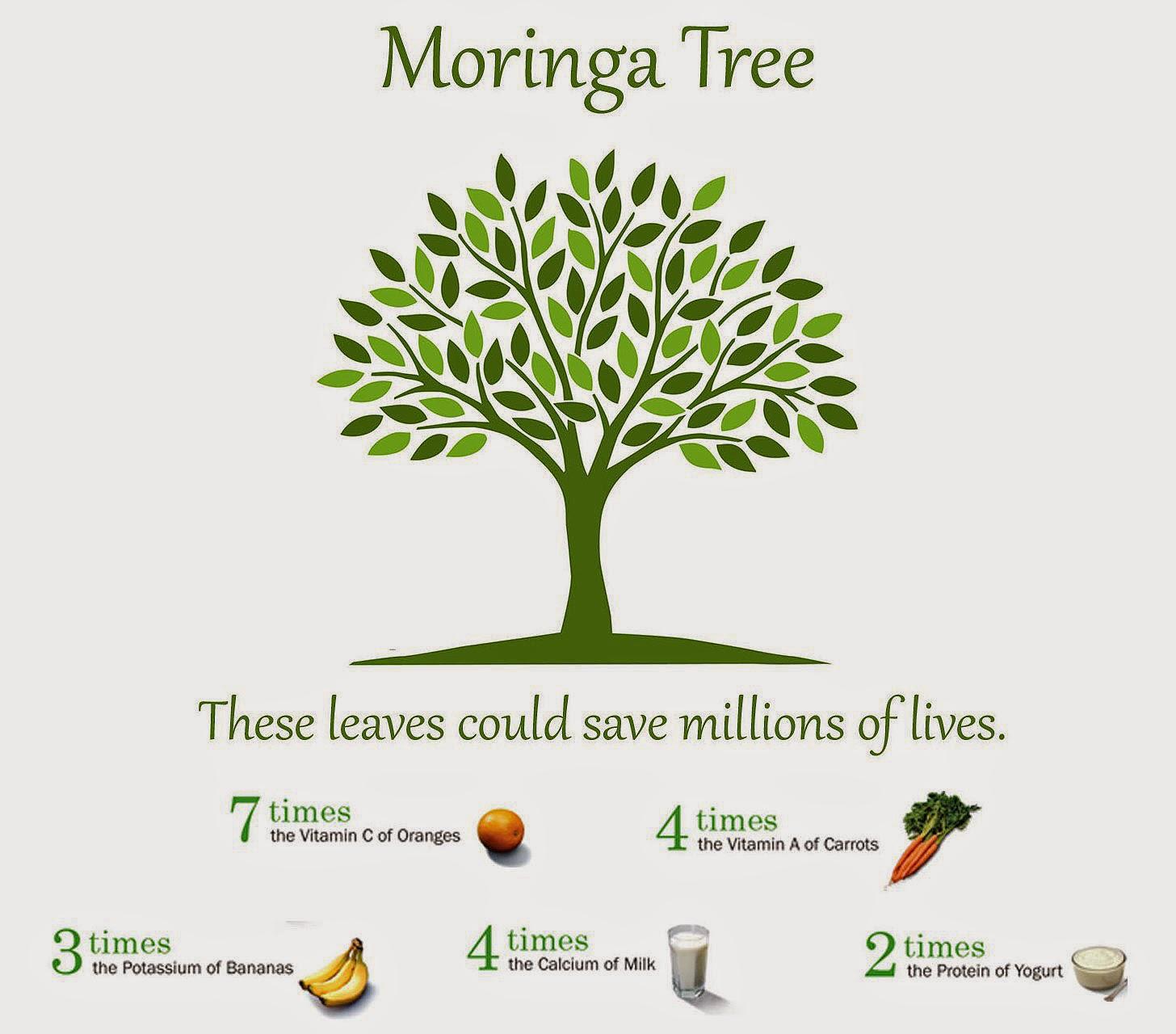 Propiedades de la Moringa, el árbol de la vida