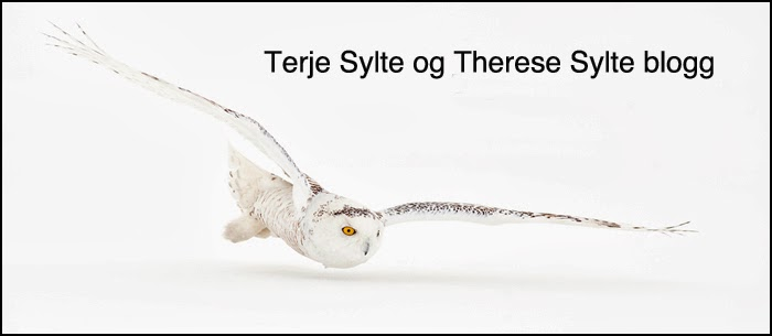 Terje Sylte & Therese Sylte blogg