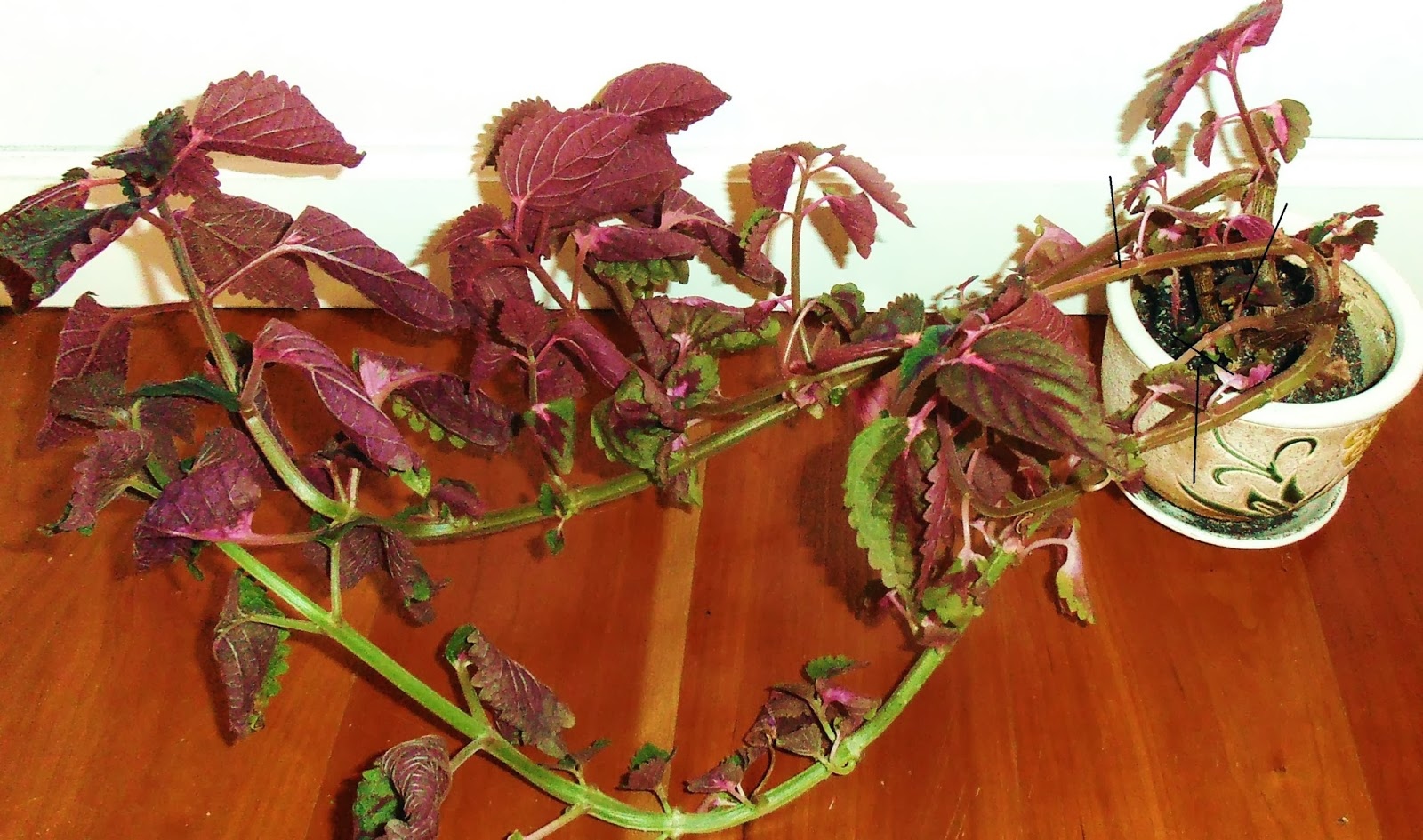 La ventana de javiruli plantas de interior 24 poda de - Plantas del interior ...