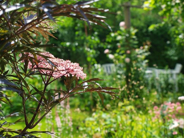 Kontraster i haven med planter med mørkt løv