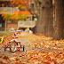 Calendário de estreias - Fall Season 2014