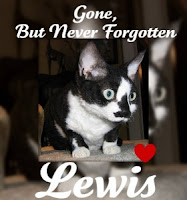 Goodbye Sweet Lewis
