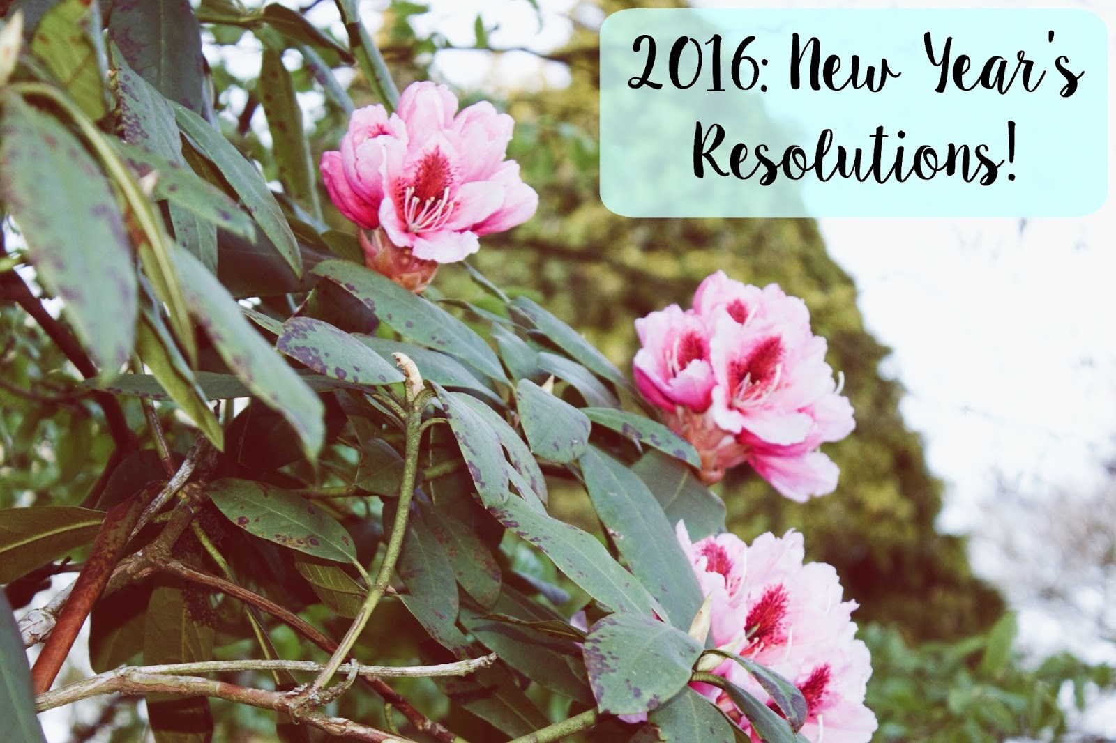 New Year's Resolutions 2016, Darley Park Derby Flowers,