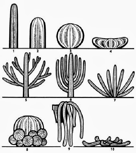kaktusi oblici tela