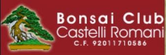 http://www.bonsaicastelliromani.it/