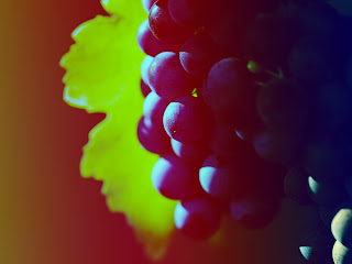 A Bunch of Dark Grapes Macro Fruit Photography HD Wallpaper