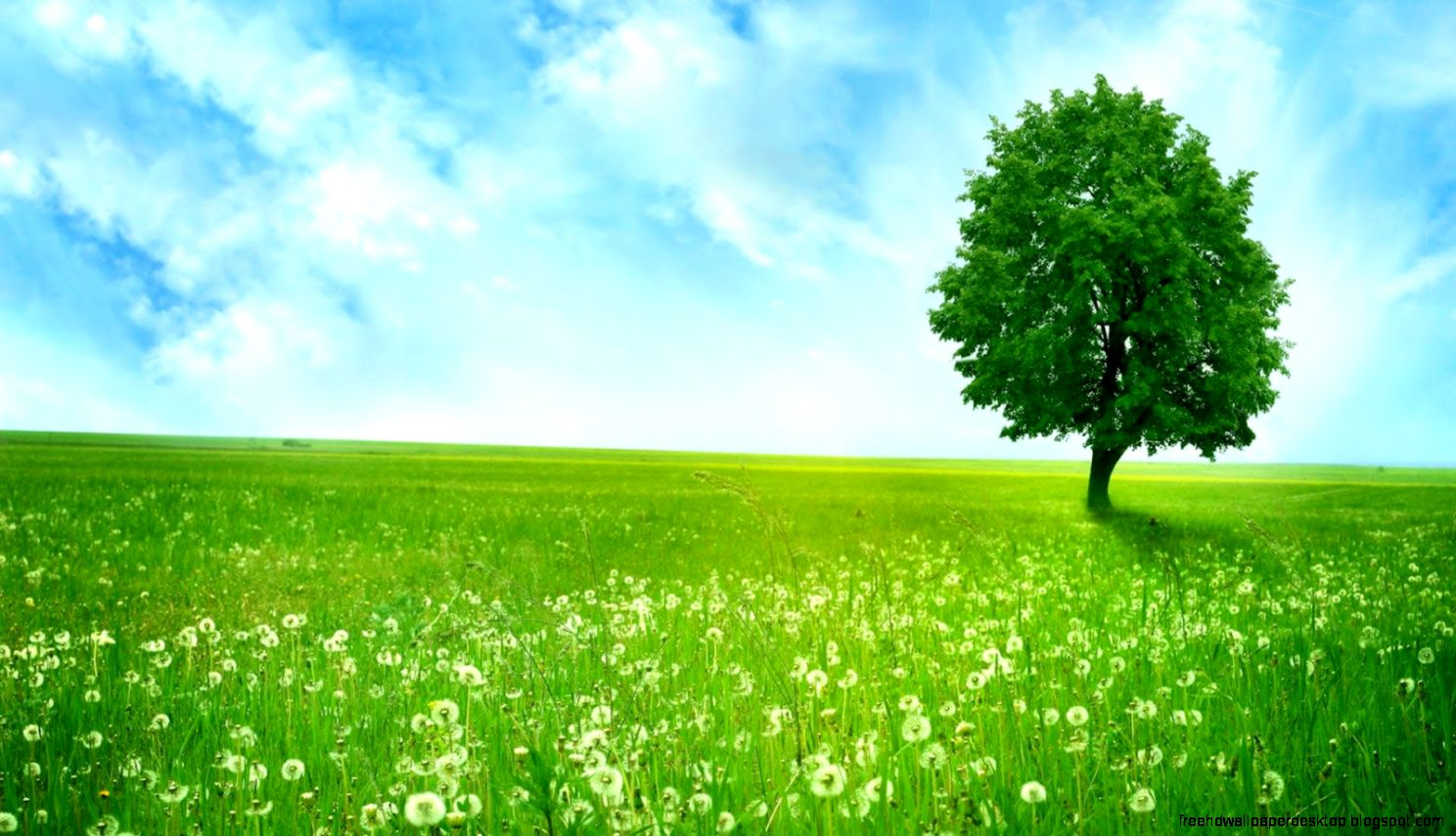 windows green grass wallpaper hd free high definition