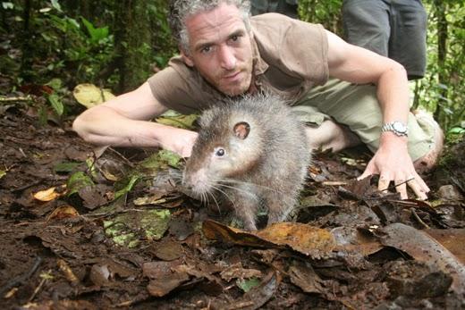 Hewan Paling Besar Yang Pernah Ditemukan Di Indonesia