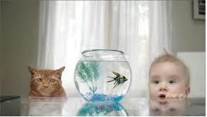 صورة مضحكة جدا لطفل صغير يشاهد سمكة بجنبه قط