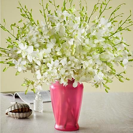 White Dendrobium Orchids flowers delivery in United states