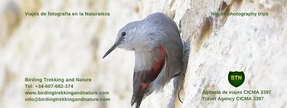 Viajes birding, Spain birding trips
