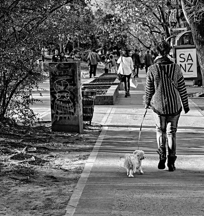 Joven paseando perrito por la acera