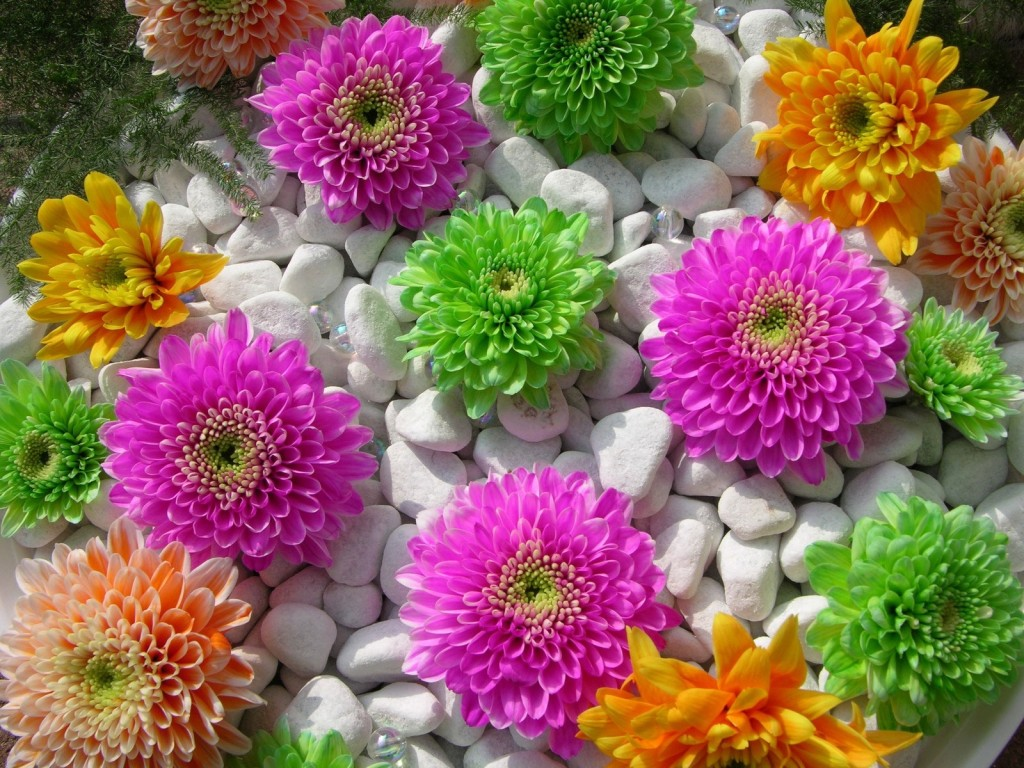 Most beautiful flowers around the world you can cut all the flowers but you cannot keep spring from coming izmirmasajfo