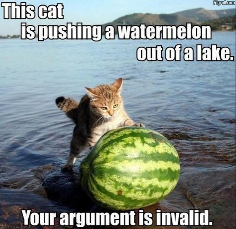Assorted cat humor title=