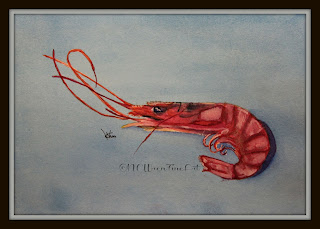 gulf shrimp ncwren watercolor 30in30