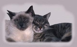 amigo está sempre perto, amigo compreende, amigo respeita