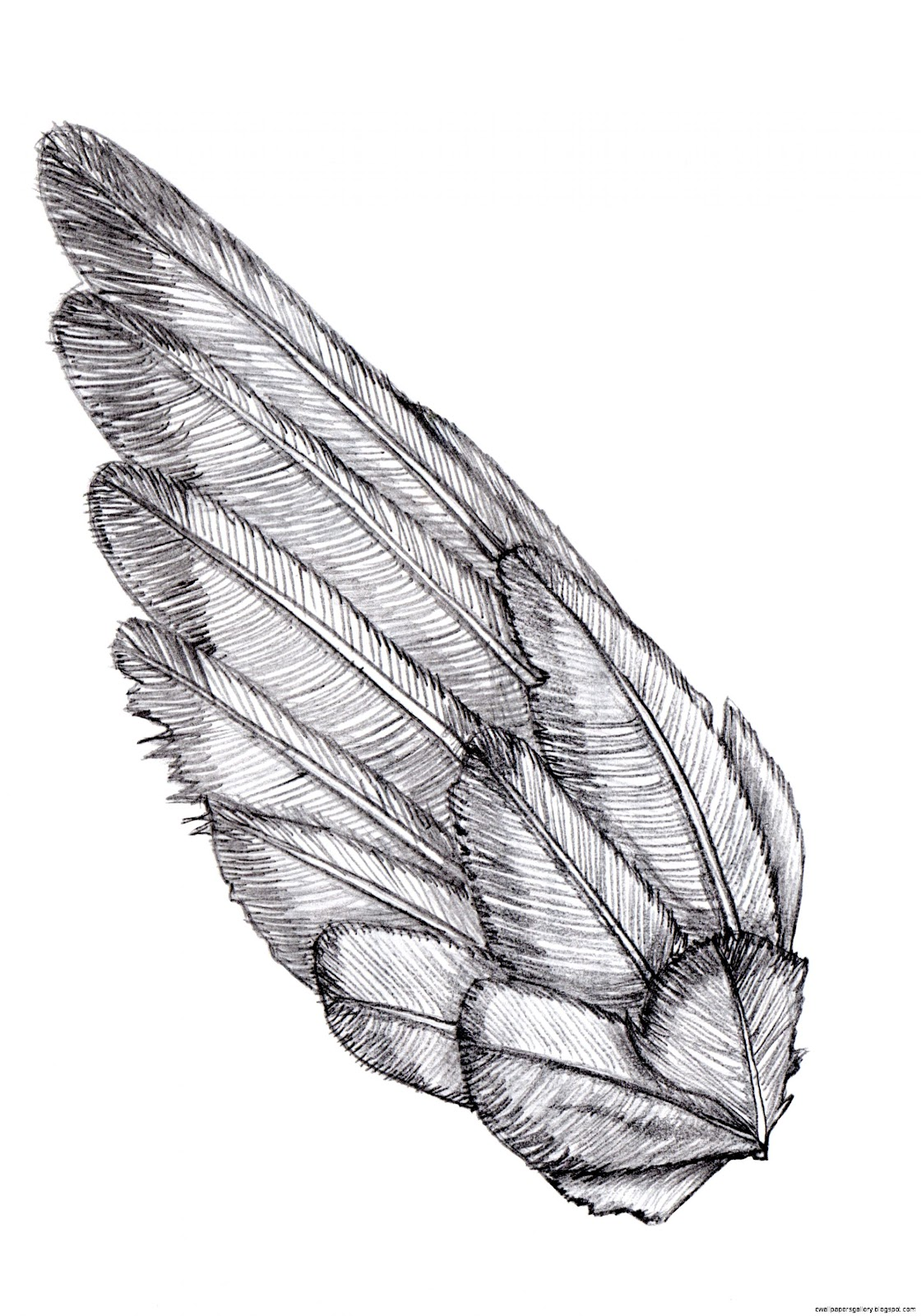 Bird Wings Drawing