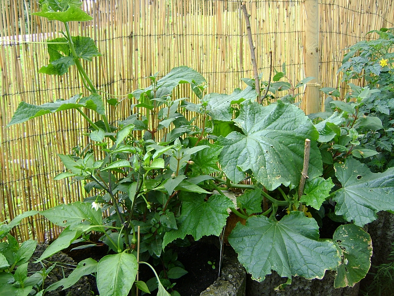 terrassen und balkonbepflanzung erdbeeren und gem se in. Black Bedroom Furniture Sets. Home Design Ideas