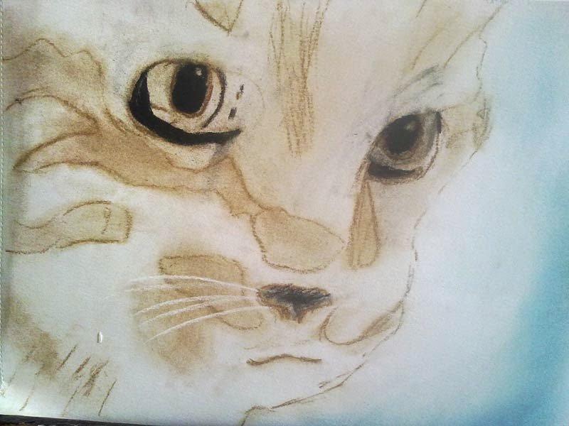 gato con tecnica seca
