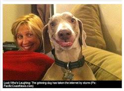 Cão sorrindo, muito legal
