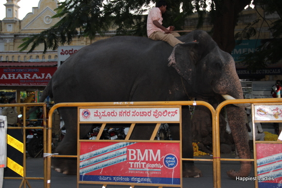Elephants practising for Jumbo Sawari Mysore