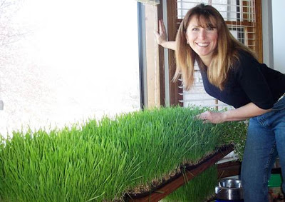 Gwen Adams with a healthy wheatgrass crop rotation