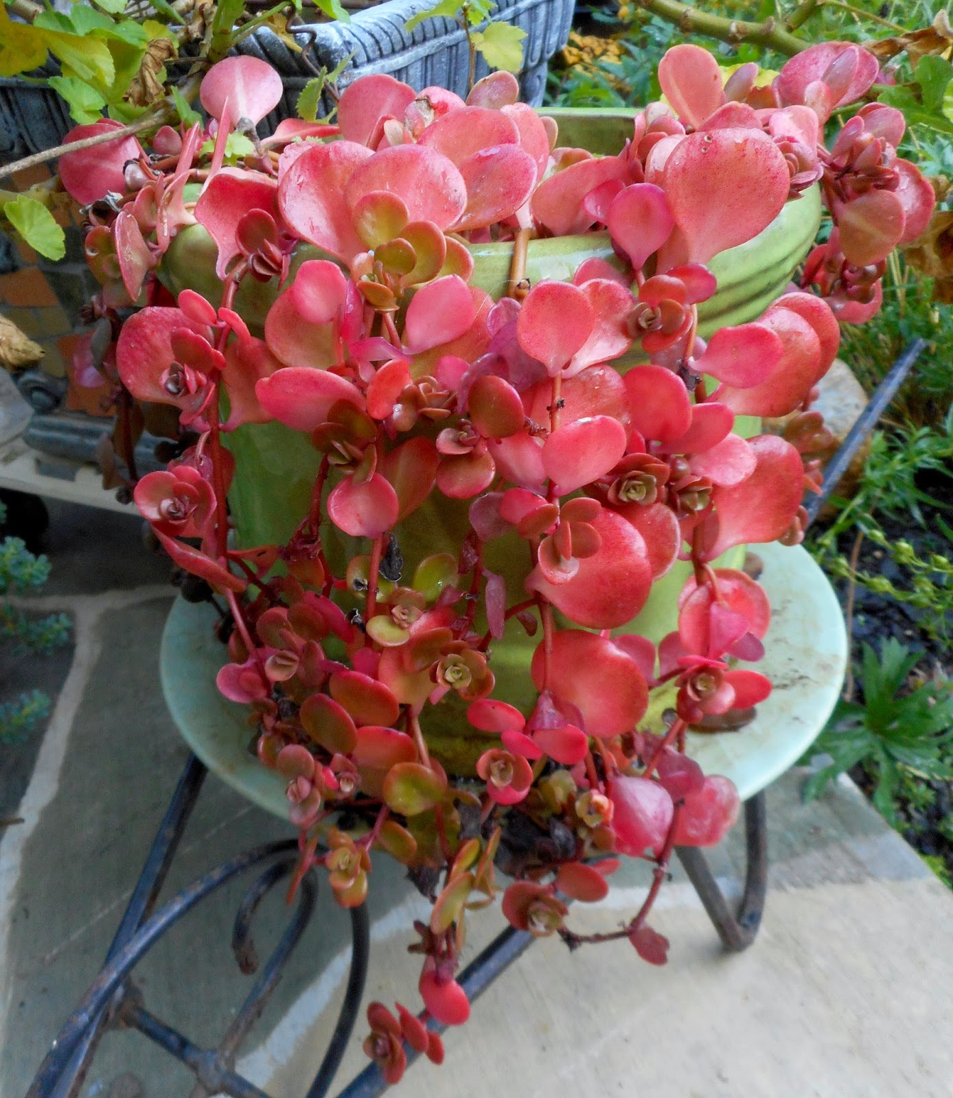 Gardening With Grace: It's Beginning To Look A Lot Like Fall