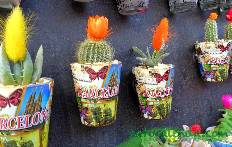 iman con cactus de barcelona