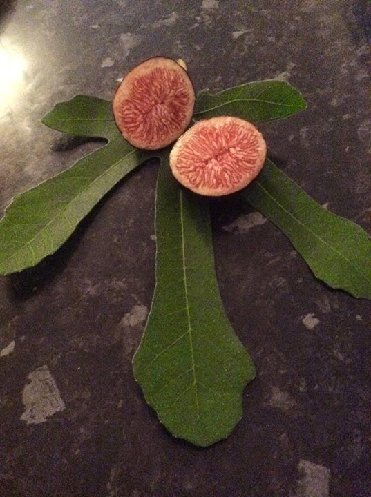 fig  RONDE DE BORDEAUX figs tart
