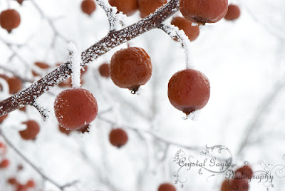 https://www.etsy.com/listing/115813177/christmas-red-winter-home-decor-fine-art