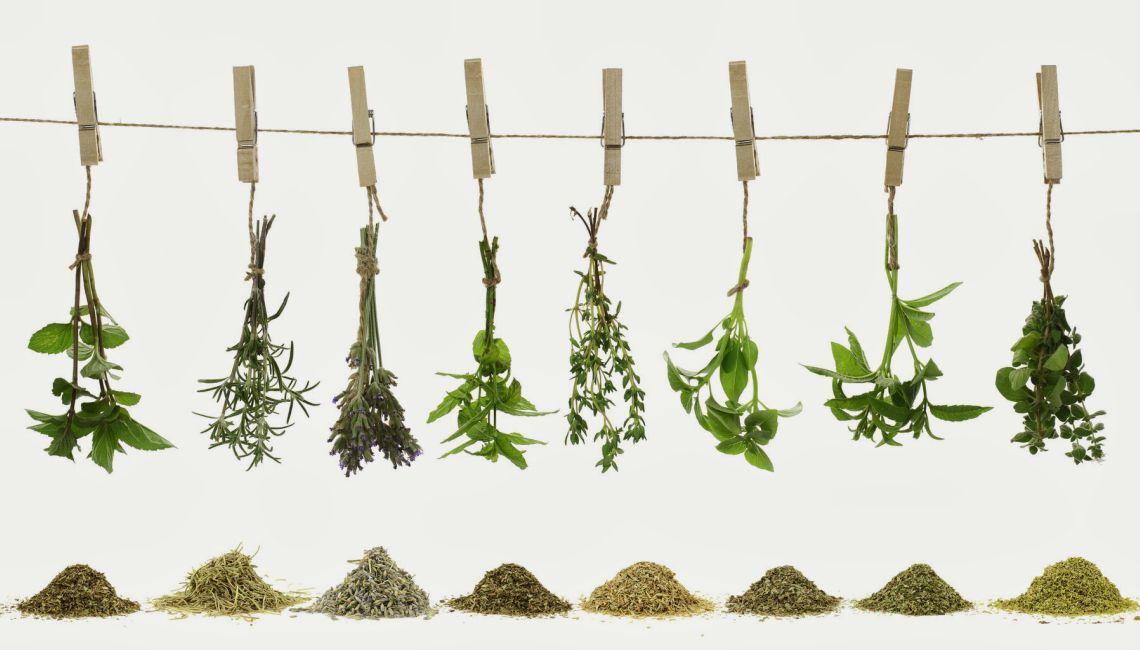 Plantas útiles da Galiza