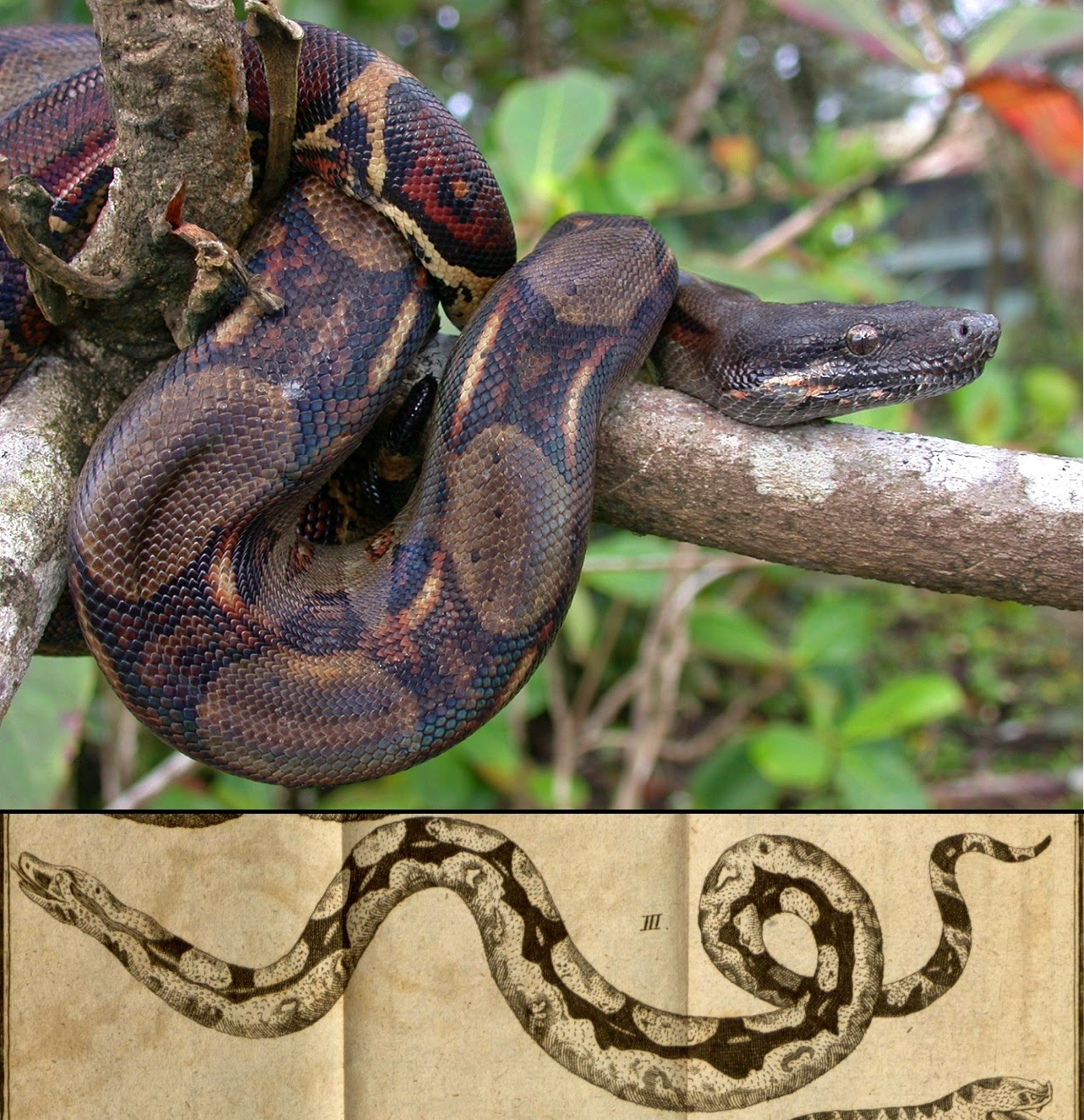 Life Is Short But Snakes Are Long June 2015